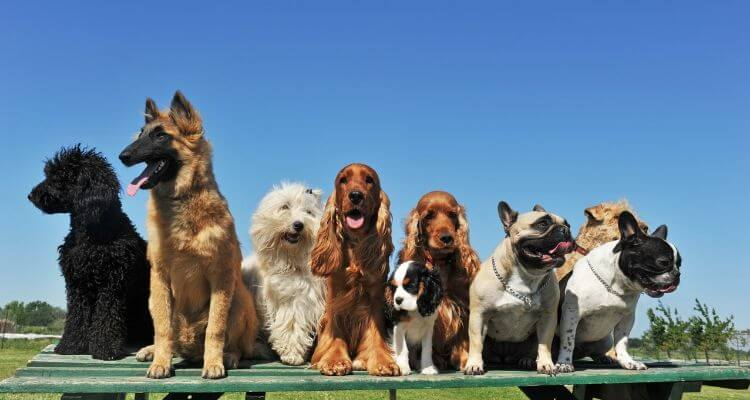 picture of dog breeds