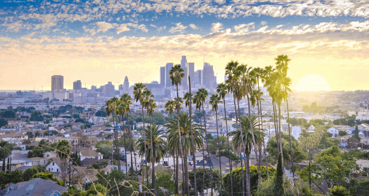 Palm trees overview in Las Angeles, California