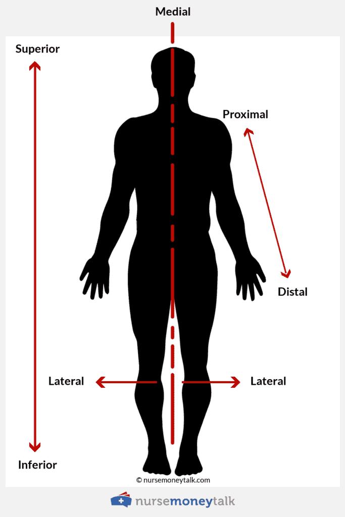 proximal vs distal - superior vs inferior - medial vs lateral
