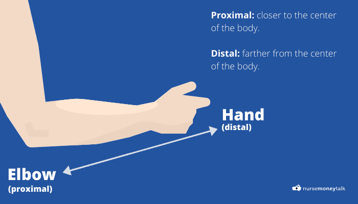 diagram of the hand and elbow