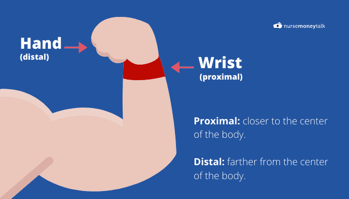 diagram of anatomical position of wrist and hand