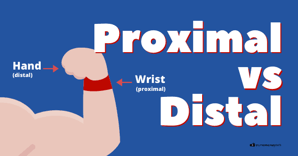 Proximal vs Distal (Examples, Diagram)